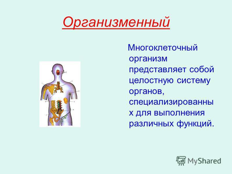 Организменный Многоклеточный организм представляет собой целостную систему органов, специализированны х для выполнения различных функций.