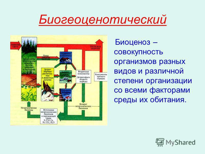 Биогеоценотический Биоценоз – совокупность организмов разных видов и различной степени организации со всеми факторами среды их обитания.