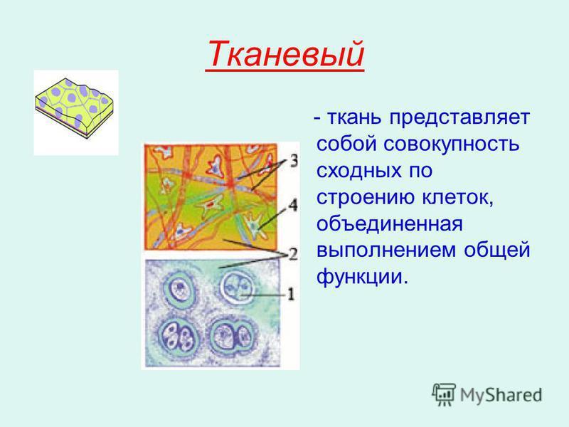 Тканевый - ткань представляет собой совокупность сходных по строению клеток, объединенная выполнением общей функции.