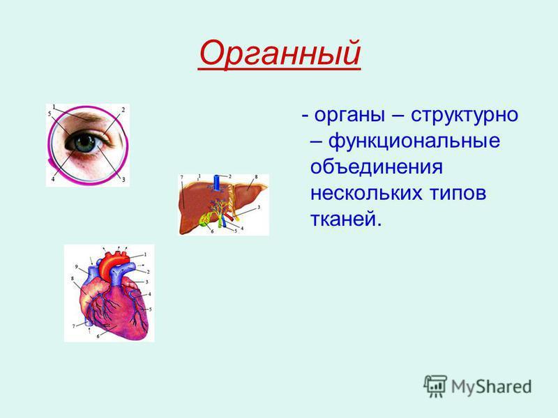 Органный - органы – структурно – функциональные объединения нескольких типов тканей.