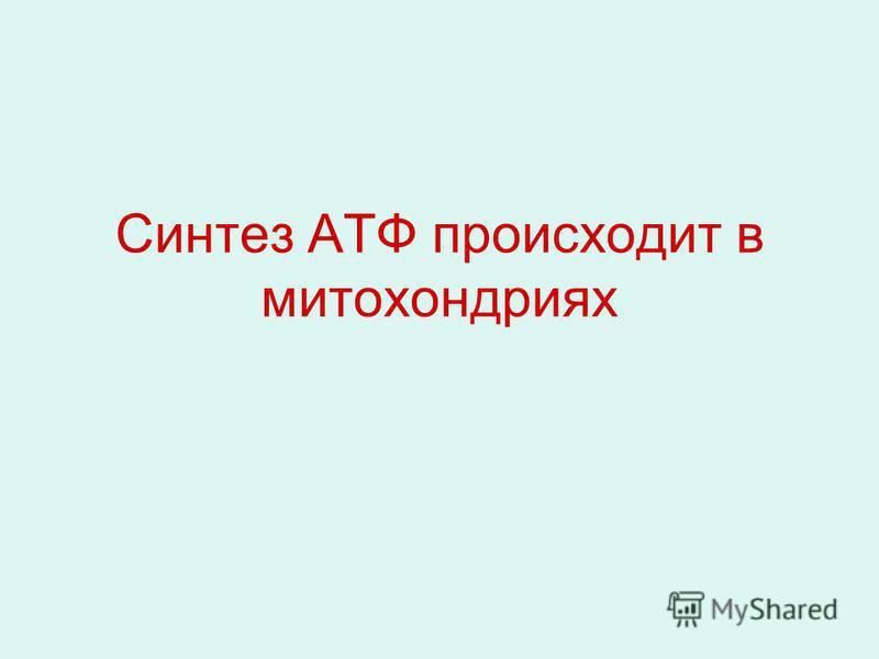 Синтез АТФ происходит в митохондриях
