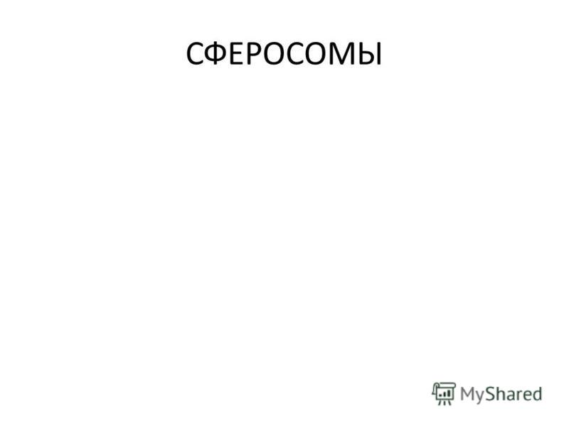 СФЕРОСОМЫ