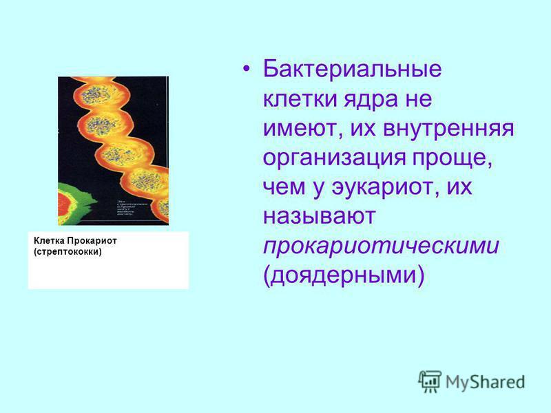 Клетка Прокариот (стрептококки) Бактериальные клетки ядра не имеют, их внутренняя организация проще, чем у эукариот, их называют прокариотическими (до ядерными)