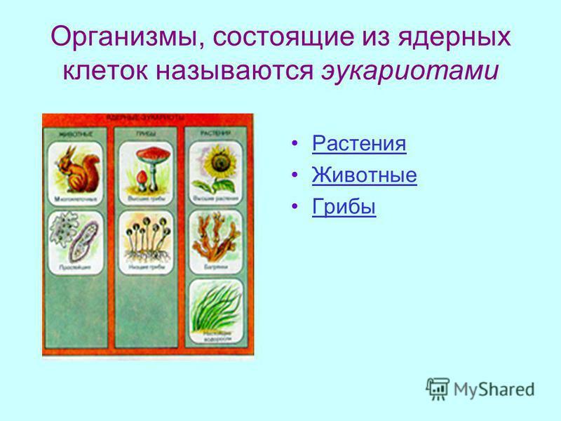 Организмы, состоящие из ядерных клеток называются эукариотами Растения Животные Грибы