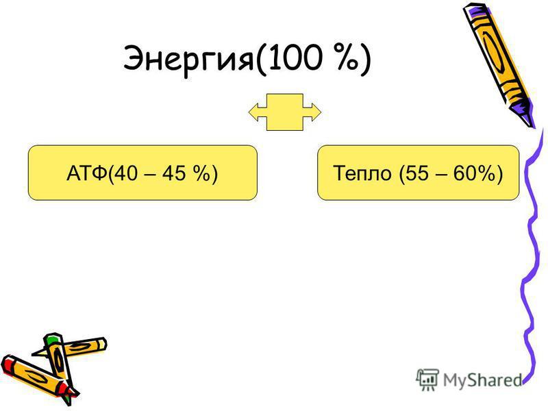 Энергия(100 %) АТФ(40 – 45 %)Тепло (55 – 60%)