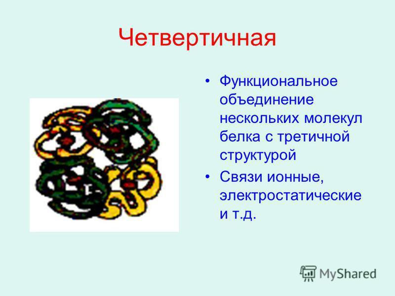 Четвертичная Функциональное объединение нескольких молекул белка с третичной структурой Связи ионные, электростатические и т.д.