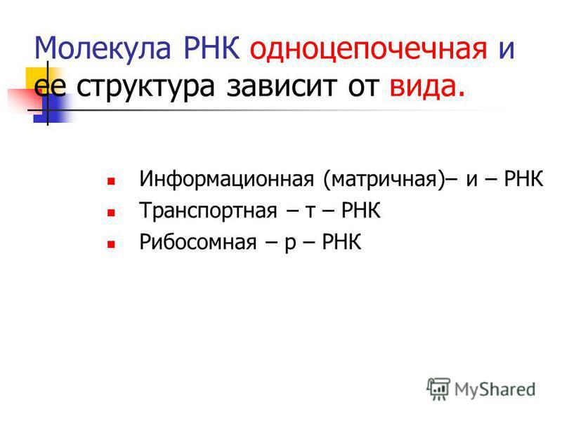 Молекула РНК одноцепочечная и ее структура зависит от вида. Информационная (матричная)– и – РНК Транспортная – т – РНК Рибосомная – р – РНК
