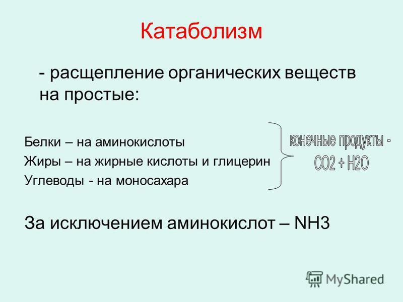 Катаболизм - расщепление органических веществ на простые: Белки – на аминокислоты Жиры – на жирные кислоты и глицерин Углеводы - на моносахара За исключением аминокислот – NH3