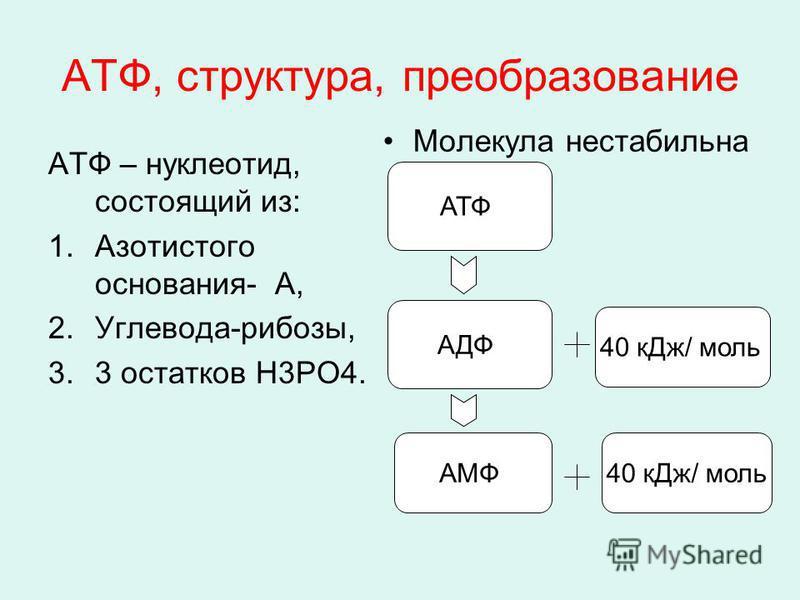 АТФ, структура, преобразование АТФ – нуклеотид, состоящий из: 1. Азотистого основания- А, 2.Углевода-рибозы, 3.3 остатков Н3РО4. Молекула нестабильна АТФ АДФ 40 к Дж/ моль АМФ40 к Дж/ моль