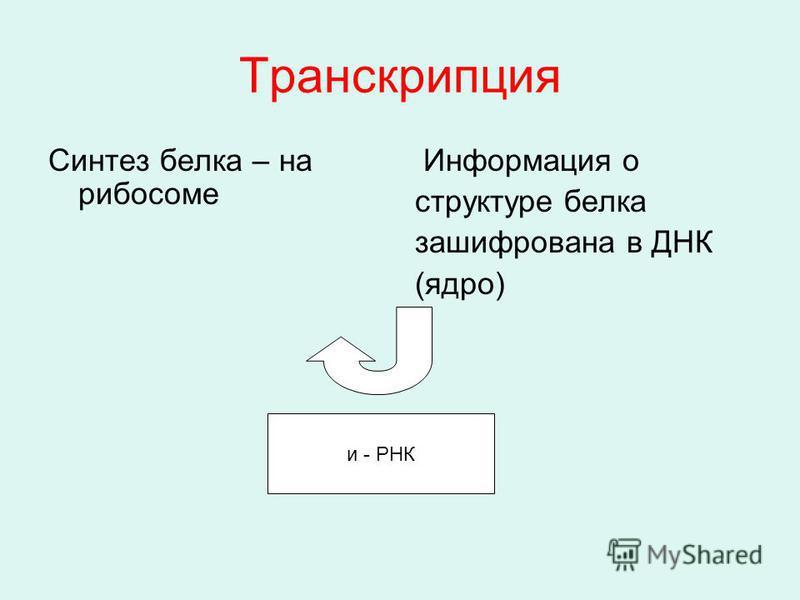 Транскрипция Синтез белка – на рибосоме Информация о структуре белка зашифрована в ДНК (ядро) и - РНК