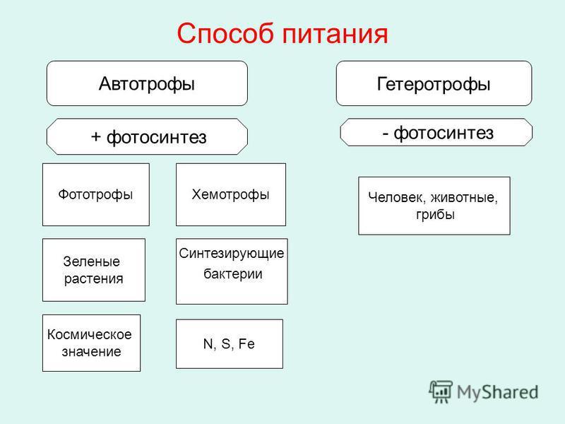Способ питания Автотрофы Гетеротрофы - фотосинтез + фотосинтез Фототрофы Хемотрофы Человек, животные, грибы Зеленые растения Синтезирующие бактерии N, S, Fe Космическое значение