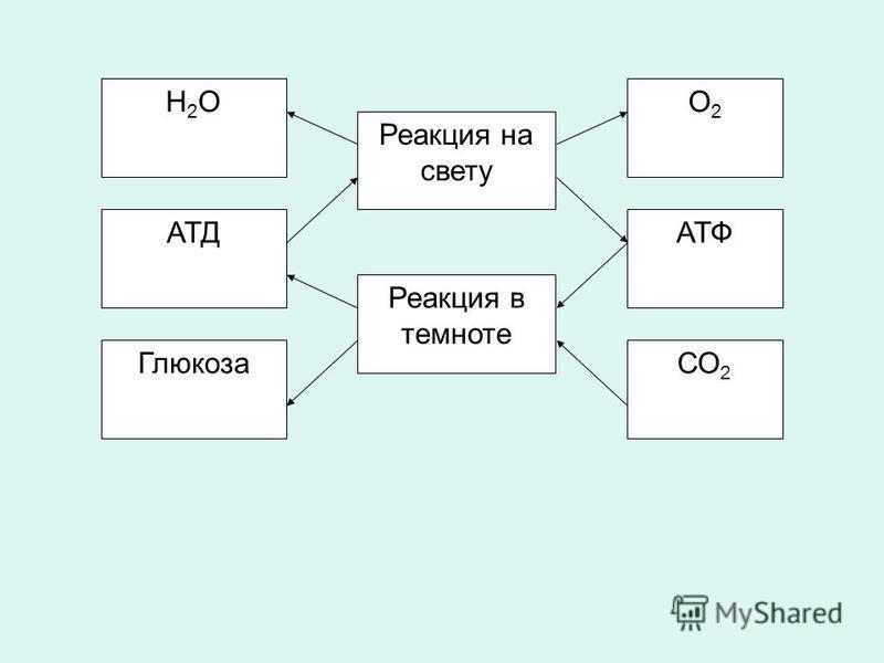 Н2ОН2О АТД Глюкоза Реакция в темноте Реакция на свету СО 2 АТФ О2О2