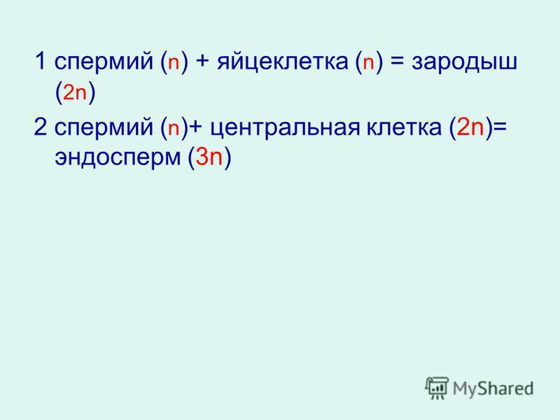 1 спермий ( n ) + яйцеклетка ( n ) = зародыш ( 2n ) 2 спермий ( n )+ центральная клетка (2n)= эндосперм (3n)