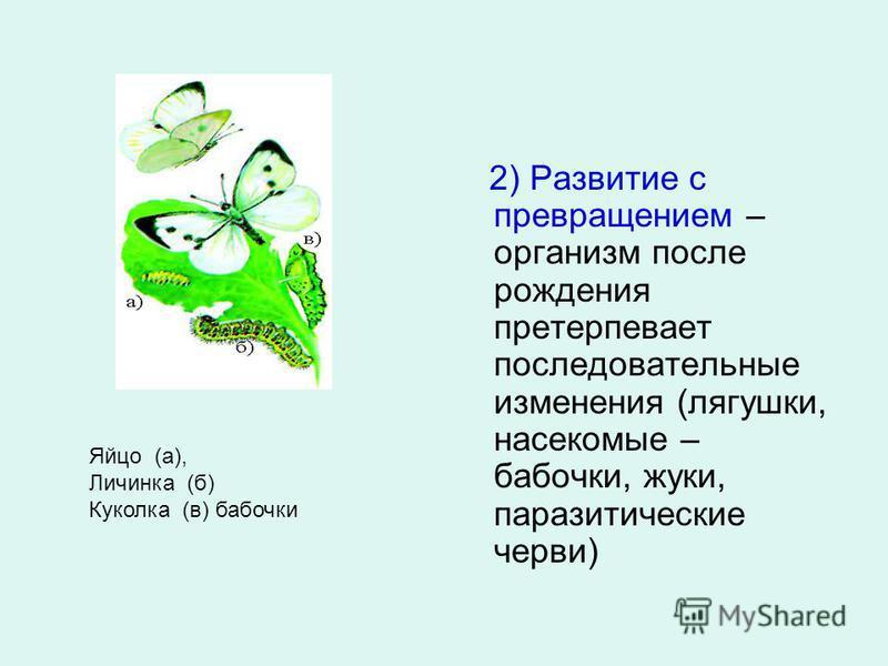 2) Развитие с превращением – организм после рождения претерпевает последовательные изменения (лягушки, насекомые – бабочки, жуки, паразитические черви) Яйцо (а), Личинка (б) Куколка (в) бабочки