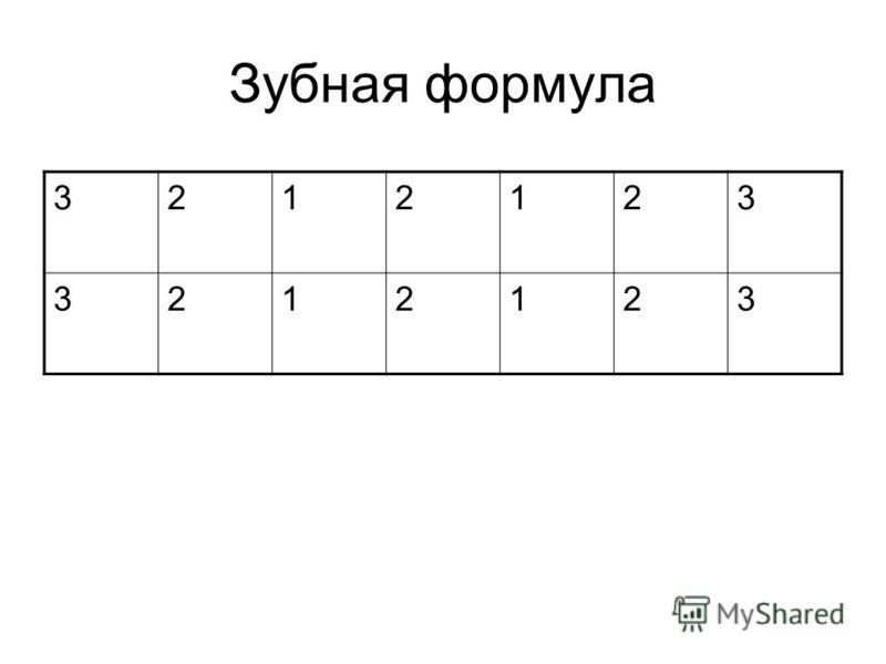 Зубная формула 3212123 3212123