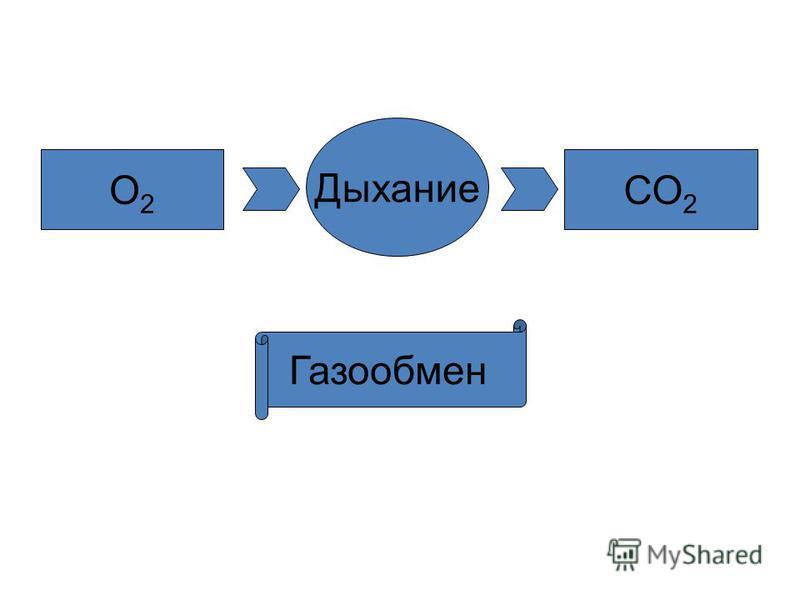 О2О2 СО 2 Дыхание Газообмен
