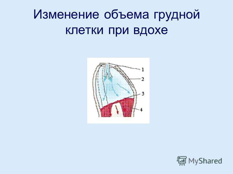 Изменение объема грудной клетки при вдохе
