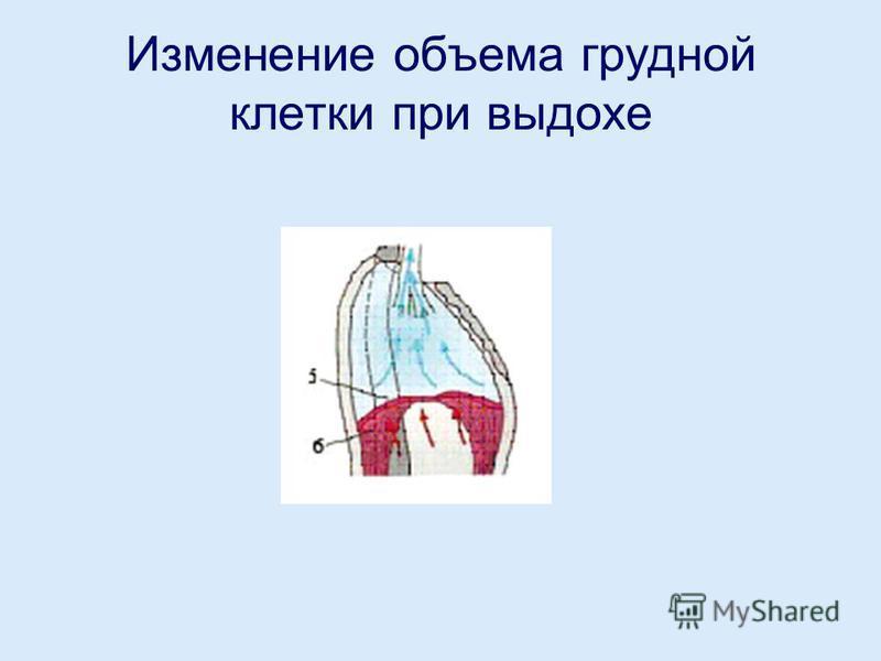 Изменение объема грудной клетки при выдохе