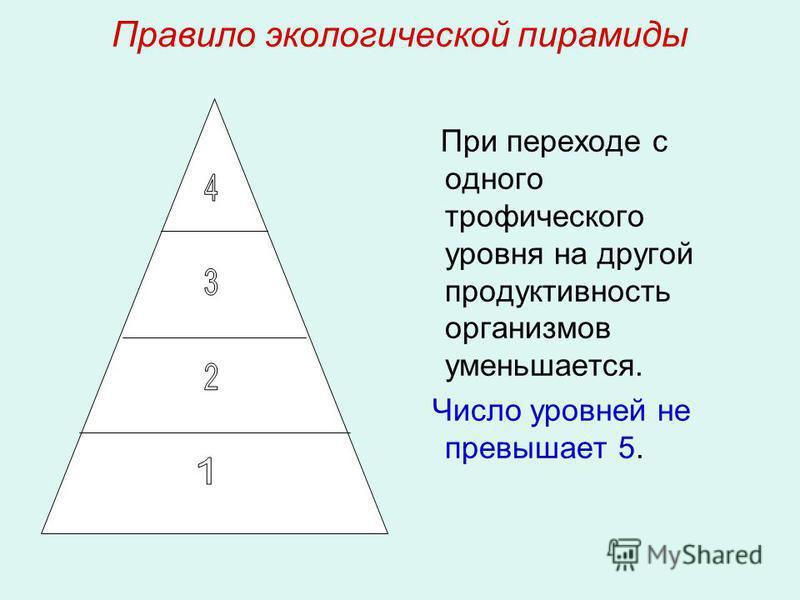 Правило экологической пирамиды При переходе с одного трофического уровня на другой продуктивность организмов уменьшается. Число уровней не превышает 5.