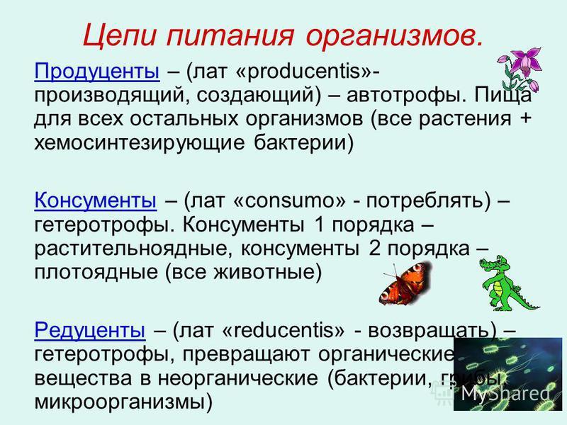 Цепи питания организмов. Продуценты – (лат «producentis»- производящий, создающий) – автотрофы. Пища для всех остальных организмов (все растения + хемосинтезирующие бактерии) Консументы – (лат «consumo» - потреблять) – гетеротрофы. Консументы 1 поряд