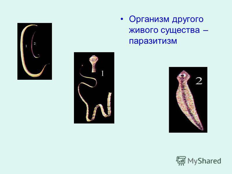 Организм другого живого существа – паразитизм