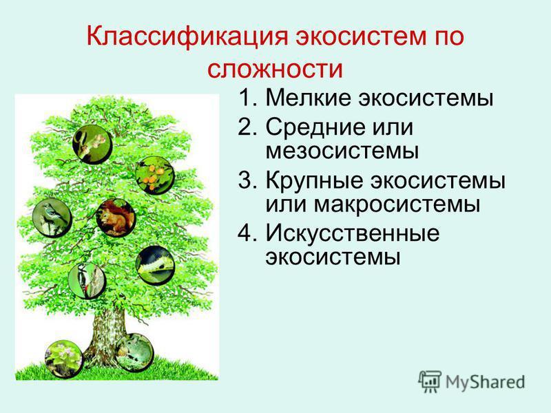 Классификация экосистем по сложности 1. Мелкие экосистемы 2. Средние или мезосистемы 3. Крупные экосистемы или макросистемы 4. Искусственные экосистемы
