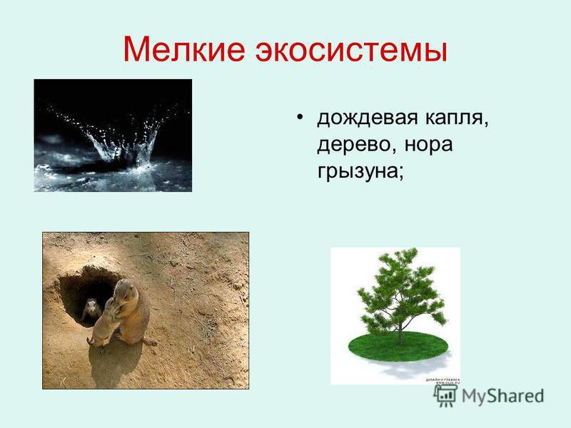 Мелкие экосистемы дождевая капля, дерево, нора грызуна;