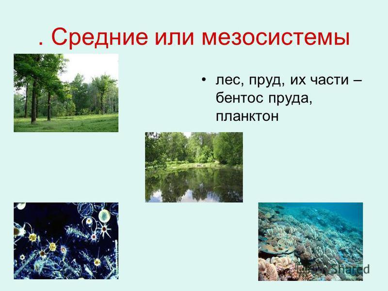 . Средние или мезосистемы лес, пруд, их части – бентос пруда, планктон