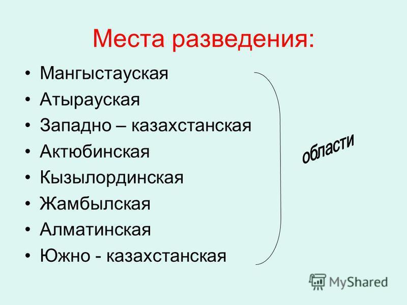 Места разведения: Мангыстауская Атырауская Западно – казахстанская Актюбинская Кызылординская Жамбылская Алматинская Южно - казахстанская