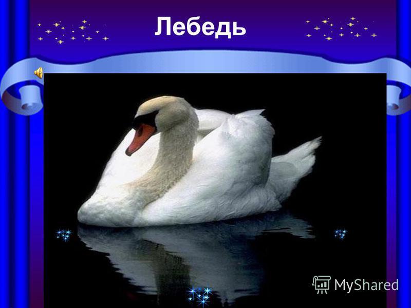 Птичник Лебедь