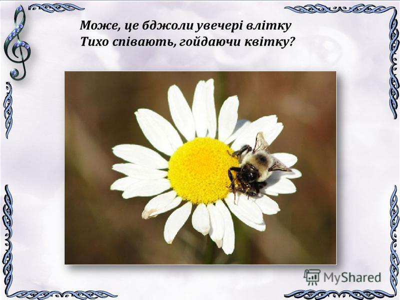 Може, це бджоли увечері влітку Тихо співають, гойдаючи квітку?