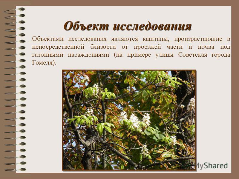 Объект исследования Объектами исследования являются каштаны, произрастающие в непосредственной близости от проезжей части и почва под газонными насаждениями ( на примере улицы Советская города Гомеля ).