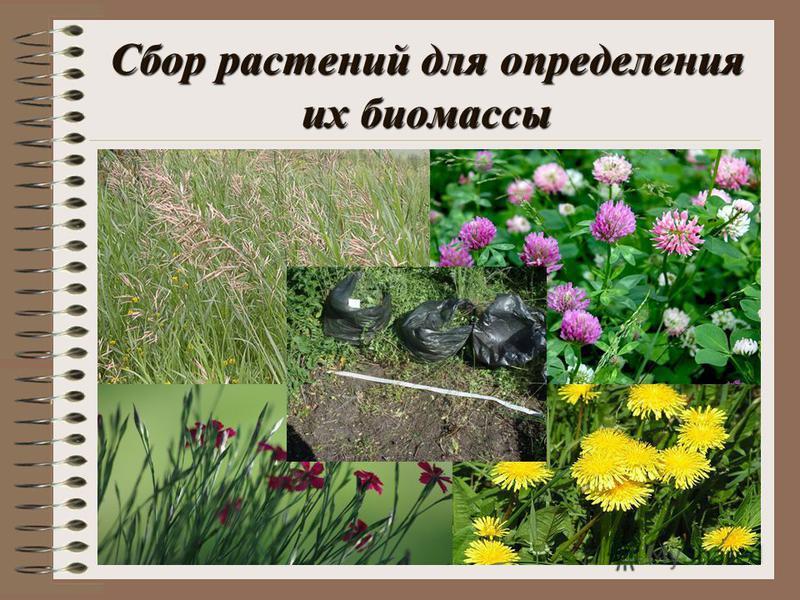 Сбор растений для определения их биомассы