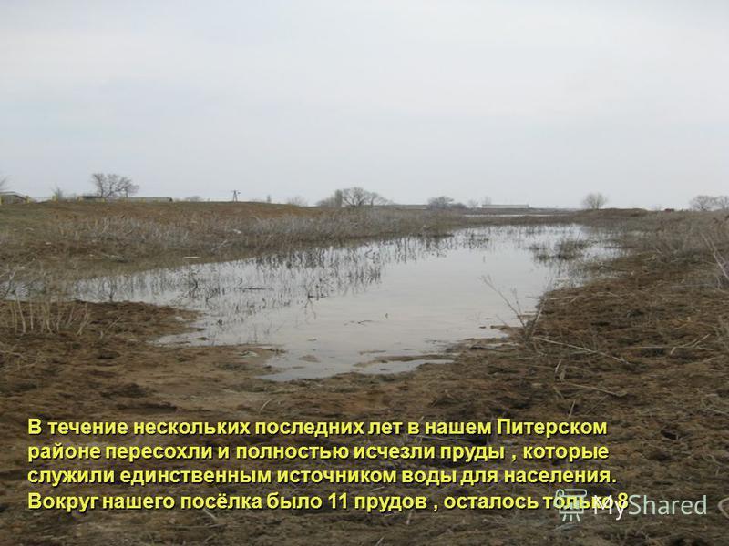 В течение нескольких последних лет в нашем Питерском районе пересохли и полностью исчезли пруды, которые служили единственным источником воды для населения. Вокруг нашего посёлка было 11 прудов, осталось только 8