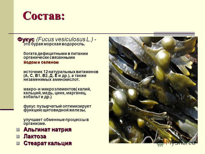 Состав: Фукус Фукус (Fucus vesiculosus L.) - это бурая морская водоросль. богата дефицитными в питании органически связанными йодом и селеном йодом и селеном источник 12 натуральных витаминов (А, С, В1, В2, Д, Е и др.), а также незаменимых аминокисло