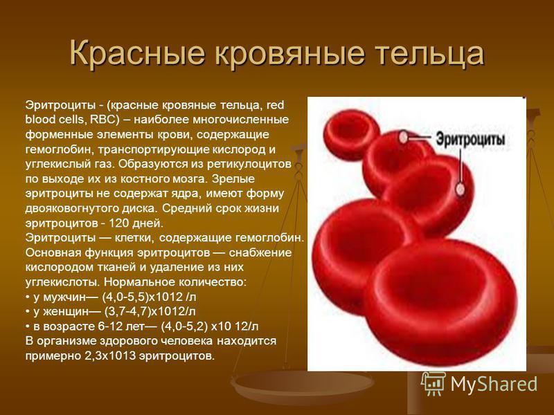 Красные кровяные тельца Эритроциты - (красные кровяные тельца, red blood cells, RBC) – наиболее многочисленные форменные элементы крови, содержащие гемоглобин, транспортирующие кислород и углекислый газ. Образуются из ретикулоцитов по выходе их из ко