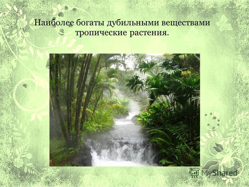 Наиболее богаты дубильными веществами тропические растения.