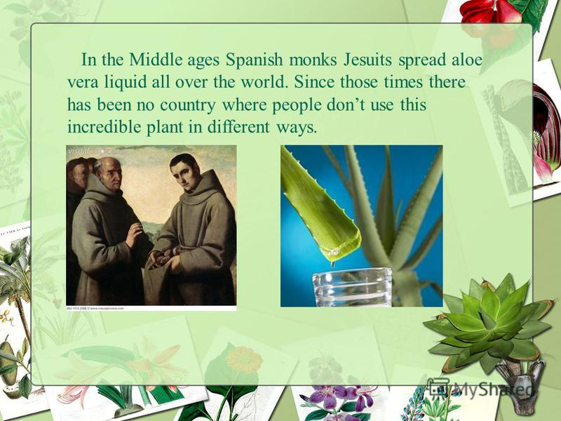 In the Middle ages Spanish monks Jesuits spread aloe vera liquid all over the world. Since those times there has been no country where people dont use this incredible plant in different ways.