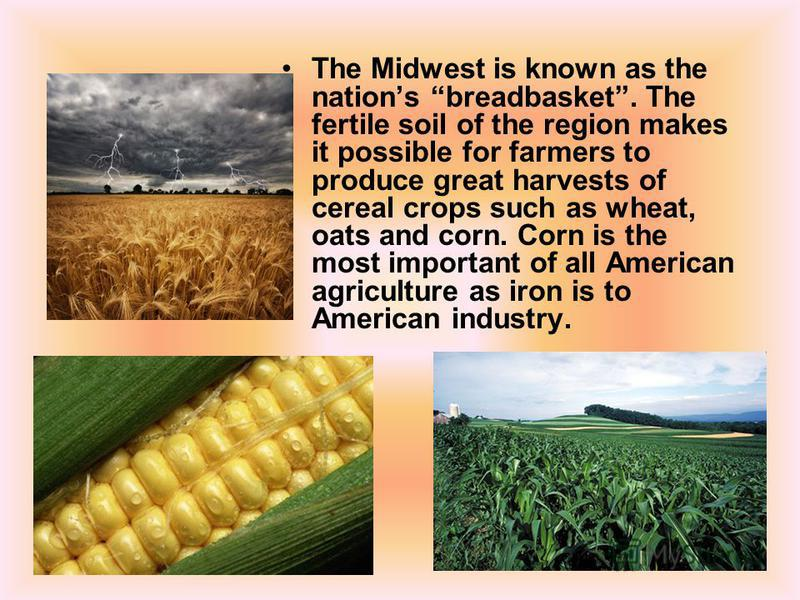 The Midwest is known as the nations breadbasket. The fertile soil of the region makes it possible for farmers to produce great harvests of cereal crops such as wheat, oats and corn. Corn is the most important of all American agriculture as iron is to