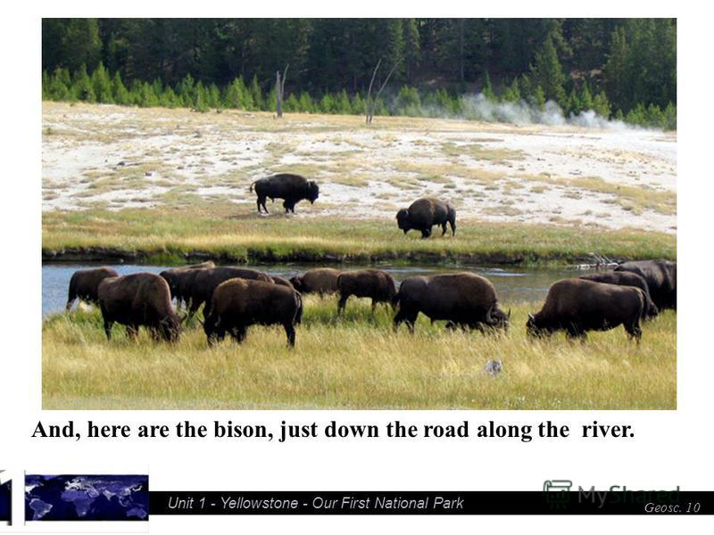 Unit 1 - Yellowstone - Our First National Park Geosc. 10 And, here are the bison, just down the road along the river.
