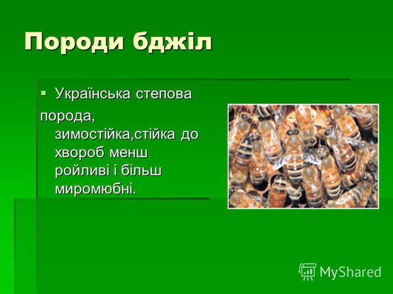 Породи бджіл Українська степова Українська степова порода, зимостійка,стійка до хвороб менш ройливі і більш миромюбні.