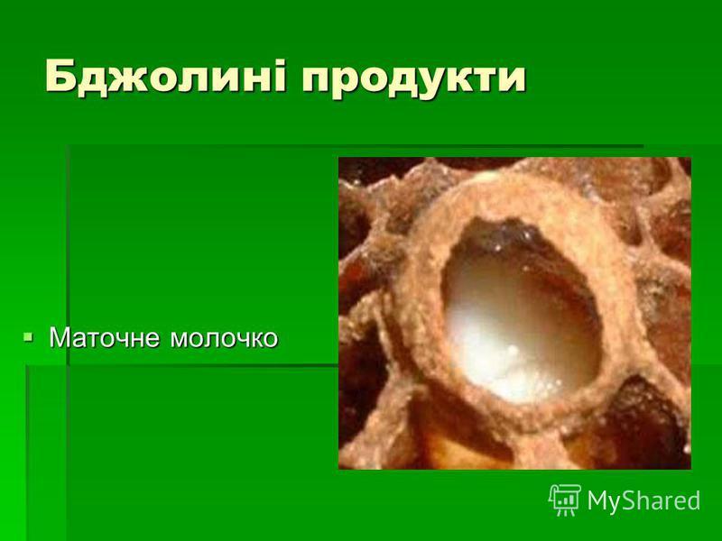 Бджолині продукти Маточне молочко Маточне молочко