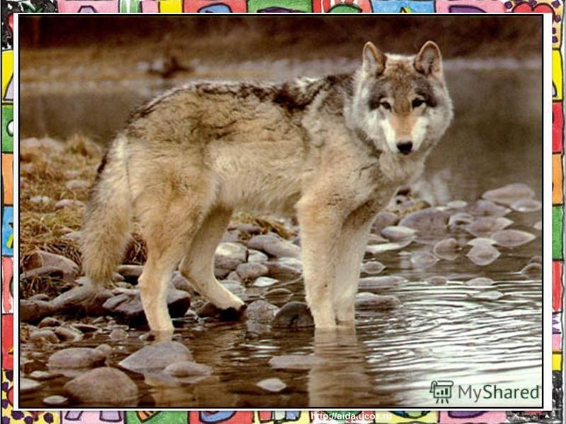 Де живуть ці тварини? Як виє вовк? Як мекає коза? Чи можуть вони говорити?