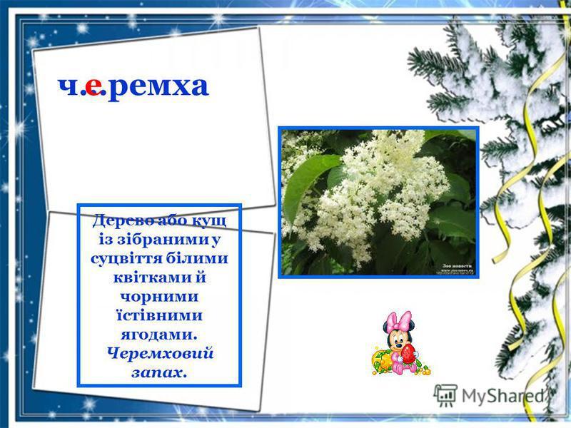 ч…ремха е Дерево або кущ із зібраними у суцвіття білими квітками й чорними їстівними ягодами. Черемховий запах.