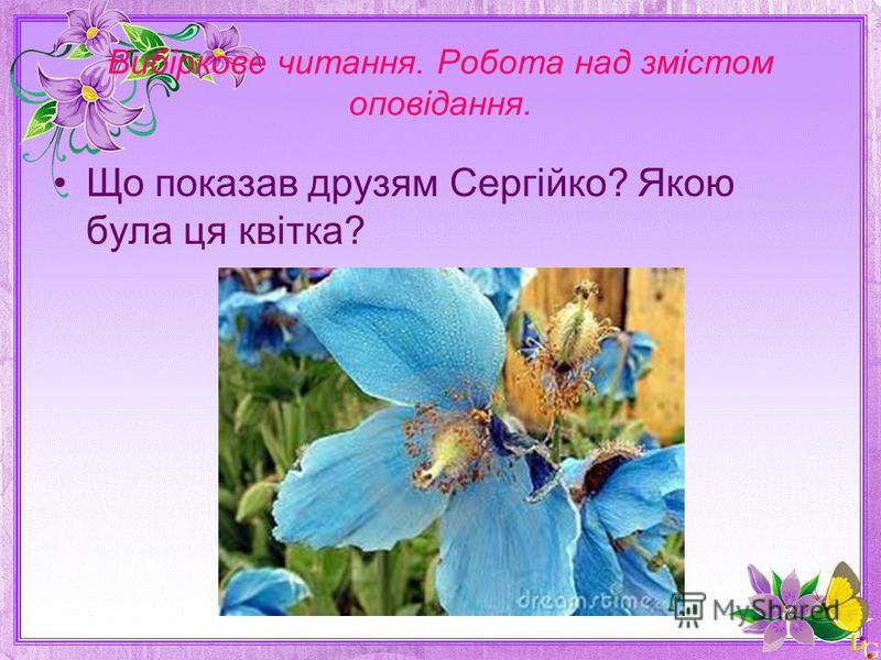 Вибіркове читання. Робота над змістом оповідання. Що показав друзям Сергійко? Якою була ця квітка?
