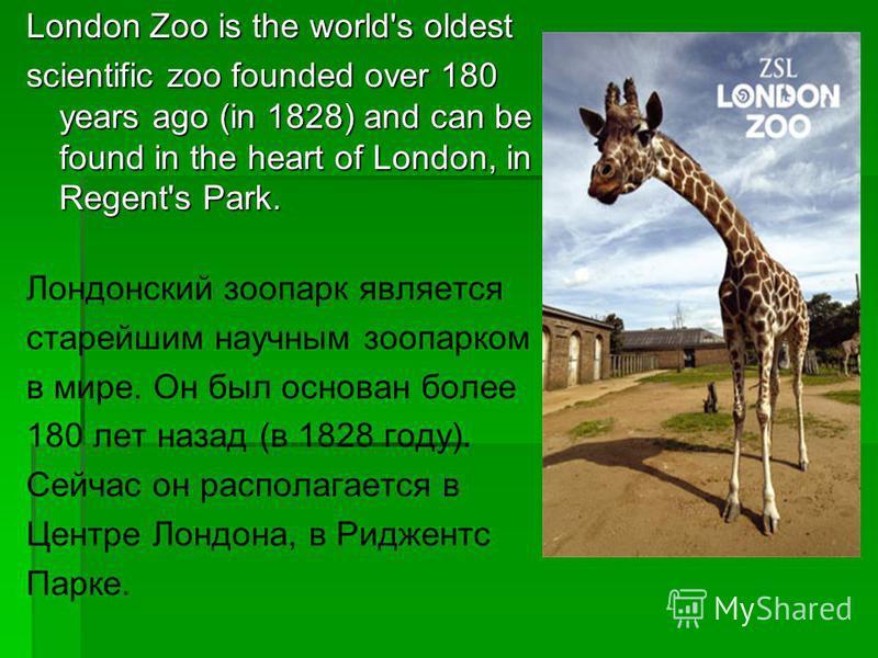 London Zoo is the world's oldest scientific zoo founded over 180 years ago (in 1828) and can be found in the heart of London, in Regent's Park. Лондонский зоопарк является старейшим научным зоопарком в мире. Он был основан более 180 лет назад (в 1828