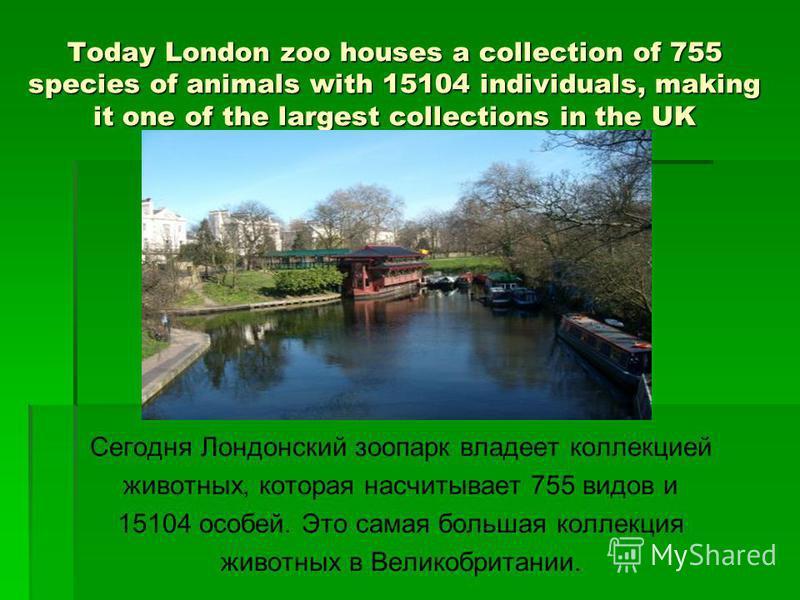 Today London zoo houses a collection of 755 species of animals with 15104 individuals, making it one of the largest collections in the UK Сегодня Лондонский зоопарк владеет коллекцией животных, которая насчитывает 755 видов и 15104 особей. Это самая