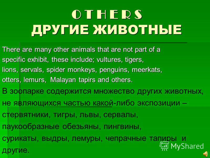 O T H E R S ДРУГИЕ ЖИВОТНЫЕ There are many other animals that are not part of a specific exhibit, these include; vultures, tigers, lions, servals, spider monkeys, penguins, meerkats, otters, lemurs, Malayan tapirs and others. В зоопарке содержится мн