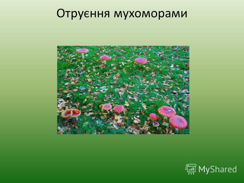 Отруєння мухоморами