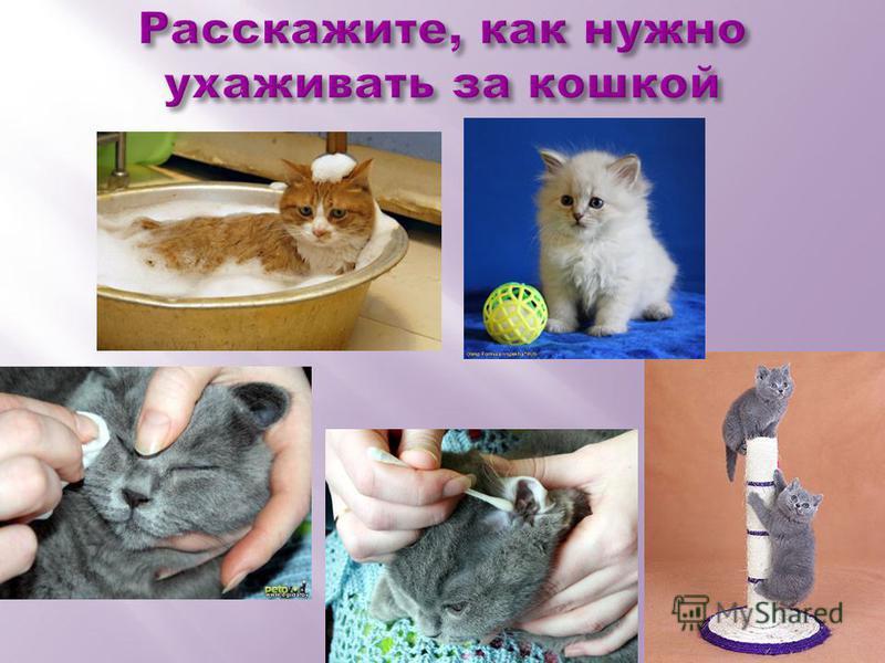 Расскажите, как нужно ухаживать за кошкой